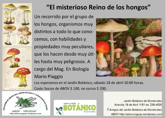 El misterioso reino de los hongos museo jard n bot nico for Hongos en el jardin