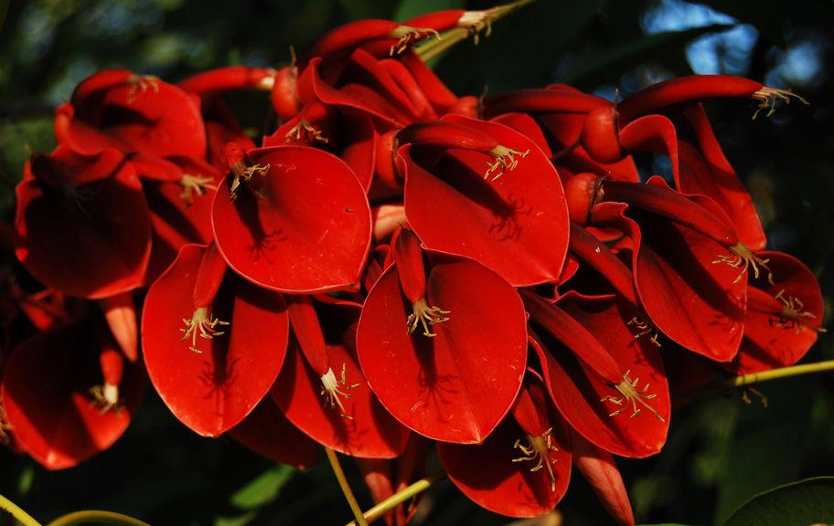 leyenda de la flor del ceibo museo jardín botánico prof atilio