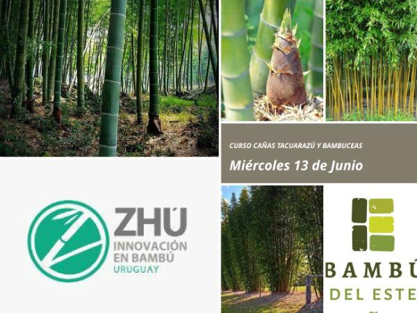 Curso Bambú en Uruguay