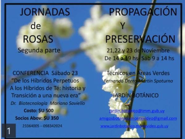 Curso de Rosas Módulo II noviembre 2019