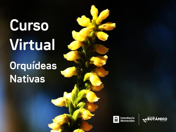 Curso VIRTUAL Orquídeas Nativas Junio 2021