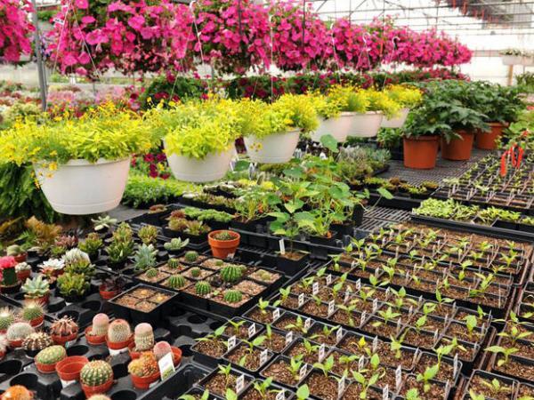 Curso Cultivo de plantas en macetas Módulo I