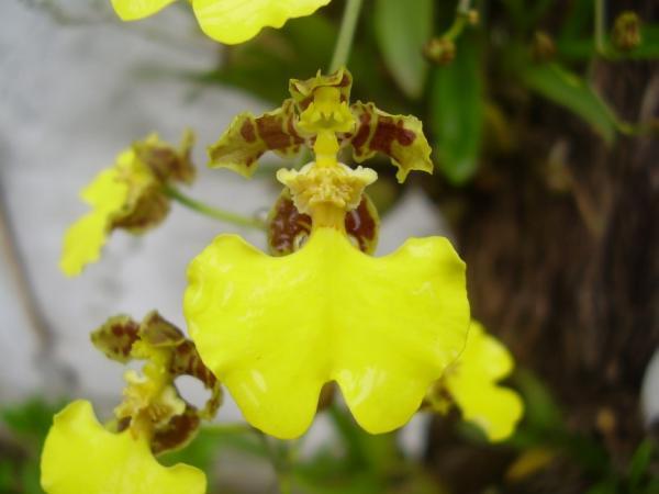 Curso de Orquídeas Nativas y Exóticas diciembre 2019