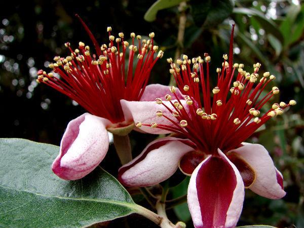"""Curso Flora Indígena """"Conocimiento y Reconocimiento"""""""