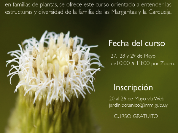 Curso VIRTUAL Compositae / Asteraceae