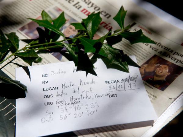 "Ejemplar de Jodina rhombifolia (Hook. & Arn.) Reissek ""Sombra de Toro"" identificación primaria, colecta para herbario"