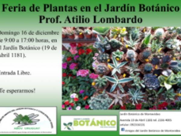 Feria de Plantas Diciembre 2018