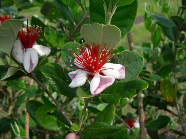 Curso Flora Indígena Octubre 2019