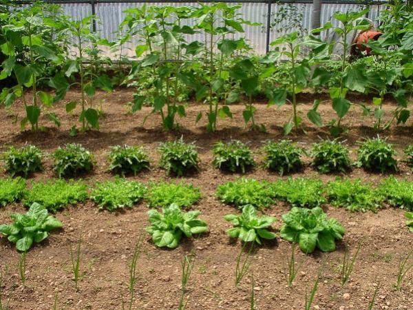 Curso Presencial Agricultura en pequeñas áreas Módulo II Octubre 2021