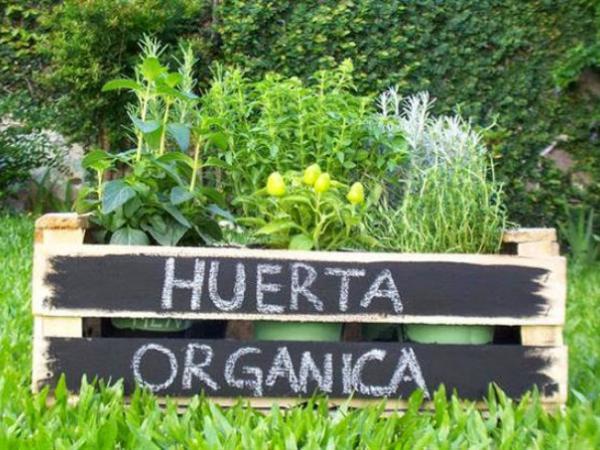 Huerta orgánica nivel III