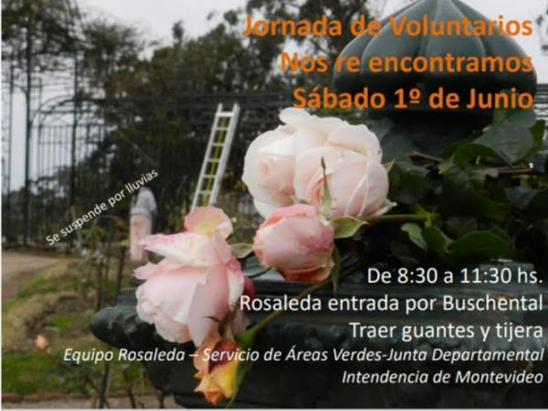 Jornada voluntaria en la Rosaleda junio 2019