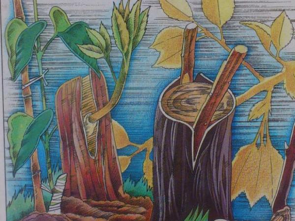 Curso Multiplicación de Plantas (Módulo 1)