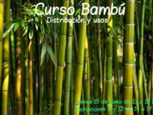Curso Bambú