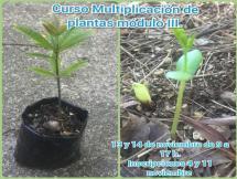 Curso Multiplicación y propagación de plantas Módulo III noviembre 2019