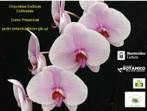 Afiche Curso presencial Orquídeas Exóticas cultivadas octubre 2020