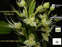 Afiche Curso presencial Orquídeas Indígenas Nativas del Uruguay setiembre 2020