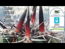 Afiche Taller virtual Cactus Módulo I Sanidad junio 2021