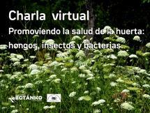 Curso VIRTUAL Cultivos de Huerta - Módulo VI - Promoviendo la salud de la Huerta