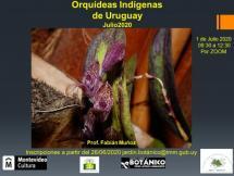 Curso VIRTUAL Orquídeas Indígenas del Uruguay