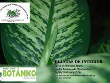 Curso Virtual Plantas Interiores