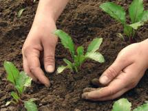 Curso Agricultura en pequeñas áreas Módulo III