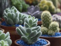 Curso Cactus y Crasas Módulo I Octubre 2019