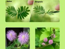 Curso Botánica pintoresca, movimientos násticos y plantas carnívoras