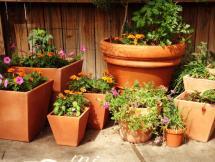 Curso Cultivo de plantas en macetas módulo II Setiembre 2019
