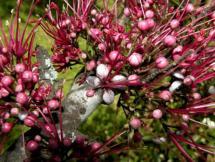 Curso de Conocimiento y Reconocimiento de Flora Indígena