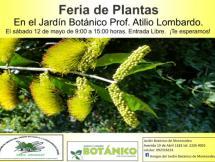Feria de plantas mayo 2018
