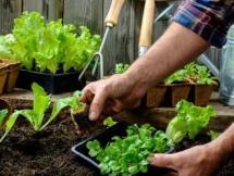 Curso Agricultura en pequeñas áreas Módulo I