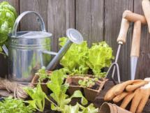 Curso Agricultura en pequeñas áreas Módulo II