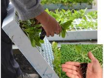 Curso Agricultura en pequeñas áreas